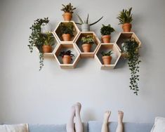 Set of 6 Hexagon/Honeycomb Shleves