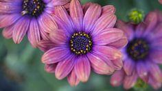 Samuel David Lehrer-Spring Flowers