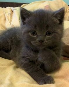 Black Beauty - Click to see loads of great pictures of cats and kittens to brighten your day.
