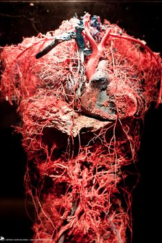 There are about 60,000 miles of blood vessels in the human body.