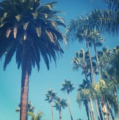 Hollywood California <3 8531 Santa Monica Blvd West Hollywood, CA 90069 - Call or stop by anytime. UPDATE: Now ANYONE can call our Drug and Drama Helpline Free at 310-855-9168.