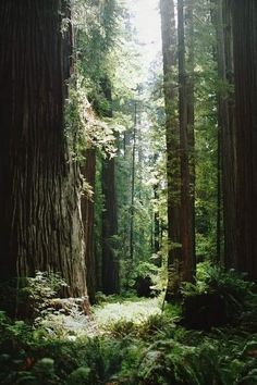 Forest. Let's go for a hike in the wood.