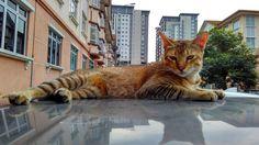 Cat amateur model