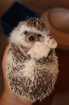 Hedgehog hugging his teddy bear...