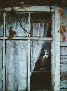 cat, window, and autumn image