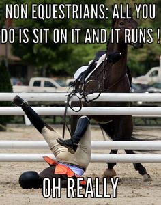 Funny Horse Videos, Funny Horse Memes, Funny Horse Pictures, Funny Horses, Funny Animal Jokes, Cute Horses, Pretty Horses, Horse Love, Funny Images