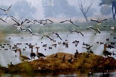Migratory birds arrive at the Sultanpur National Park near Gurgaon. #nature #photos #India https://twitter.com/IndianExpress