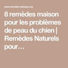 8 remèdes maison pour les problèmes de peau du chien | Remèdes Naturels pour…