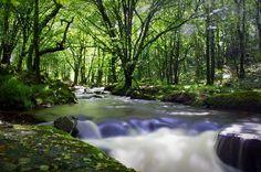 Golitha Falls, Cornwall  www.stnicholasphotography.co.uk