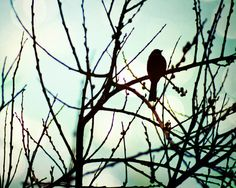 Nature photography animal photography Bird by NostalgiaCaptured, $25.00