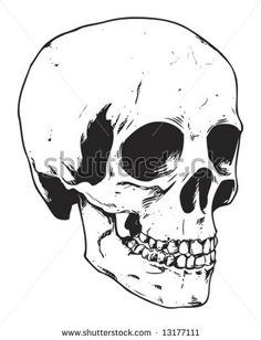 stock vector : human skull