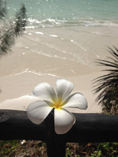 Baobab Beach Resort, Diani Beach, Kenya Sunflower Wallpaper, Rose Wallpaper, Spring Photography, Nature Photography, Nature Pictures, Beautiful Pictures, Diani Beach, Palm Trees Beach, Summer Backgrounds