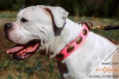 Fashion Pink Leather Dog Collar for American Bulldog