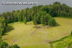 Lehmät laitumella, Ikaalinen Ilmakuva: Lentokuva Vallas Oy