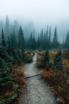 Moody walks in the forest. by Nick Verbelchuk Beautiful World, Beautiful Places, Landscape Photography, Nature Photography, Nature Aesthetic, All Nature, Walking In Nature, Nature Pictures, Forest Pictures