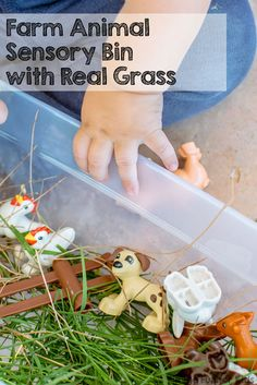 Simple Sensory Activities for Toddlers: Farm Animal Sensory Bin with Real Grass!
