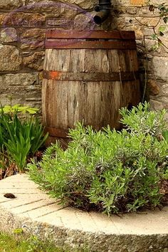 Oak rain barrel -- I completely forgot that wine barrels are liquid tight! Duh.  Why is this better than a plastic rain barrel?  1. It WAY cooler looking.  2. It will biodegrade & won't last 1,000 years. 3. It won't leach potentially harmful chemicals into my vegetables & soil.  <3