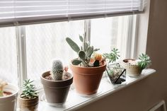 Cacti on the window sill