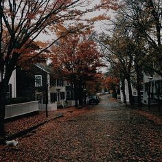 Leaf covered streets