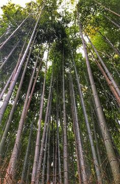 Kyoto's Arashiyama Bamboo Forest is located in western part of Kyoto near the base of the Arashiyama Mountains. How to get to Arashiyama Bamboo Forest Foyers, Ikebana, Bamboo Forest Japan, Inexpensive Kitchen Cabinets, Bamboo Tree, Bamboo Fence, Green Nature, Wonders Of The World, Mother Nature