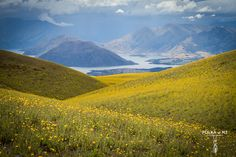 yellow hills, Little Criffel Track, Wanaka, Central Otago, South Island, New Zealand