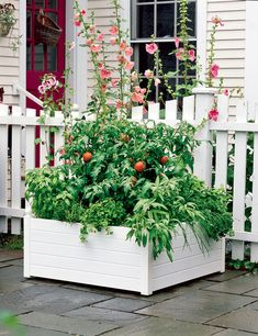 white polypropylene raised bed against picket fence planted with tomatoes and various herbs