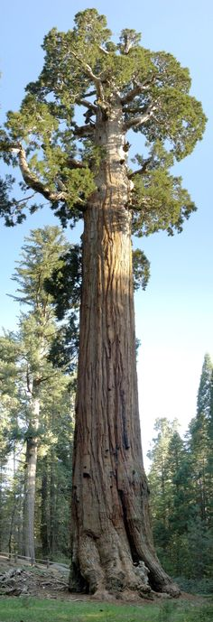 Kings Canyon National Park – Wikipedia, the free encyclopedia The General Grant tree is the largest giant sequoia (Sequoiadendron giganteum) in the General Grant Grove section of Kings Canyon National Park in ..  http://www.scienceandnature.science/2017/05/18/kings-canyon-national-park-wikipedia-the-free-encyclopedia/