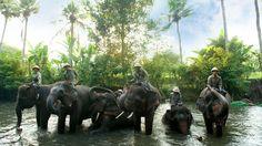 Elephant Family, Bali zoo park - Indonesia