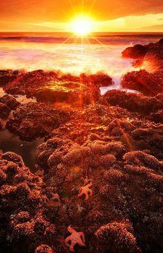 Oregon Coast Sunset Mohammed Alomran