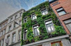 Most popular green wall facade lighting Ideas Wall Exterior, Modern Exterior, Compound Wall Design, Vertical Farming, Vertical Gardens, Green Facade, Vertical Garden Design, Facade Lighting, Brick Colors