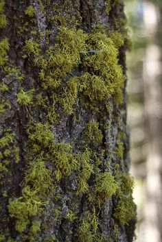 It's the little things that make the difference: Moss on tree.