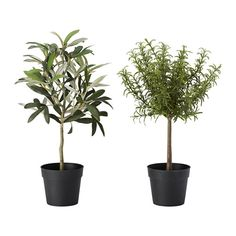 IKEA - FEJKA, Artificial potted plant, Lifelike artificial plant that remains looking fresh year after year.   4.99