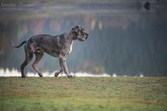 Kerstin Pinnen Photodesign | Tiere Tier Fotos, Panther, Design, Animals, Archive, Pet Dogs, Animales, Animaux, Panthers