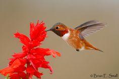Brian E. Small Bird Photography