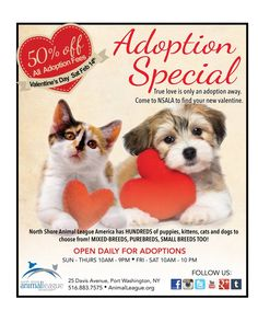 True love is only one adoption away! Find your new Valentine and approved adopters can save 50% on all adoption fees tomorrow, Saturday, February 14th! We have many dogs, cats, puppies and kittens now available to fill your heart with joy.If you can't adopt, become a sponsor! You'll be helping specials needs dogs, cats, or newborns in our care that might never get adopted: www.animalleague.org/sponsorOur adoption center will be open from 10am - 10pm at 25 Davis Ave., Port Washington NY.