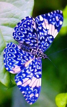 √ 6 Different Types of Butterflies Different Types of ButterfliesYou can find Butterflies and more on our website.√ 6 Different Types of Butterflies Different Types of Butterflies Butterfly Photos, Butterfly Wallpaper, Blue Butterfly, Butterfly Wings, Butterfly Mobile, Butterfly Flowers, Monarch Butterfly, Beauty Butterflies, Types Of Butterflies