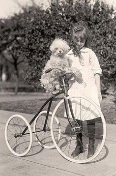 Poodle on large tricycle with girl. Vintage photo.