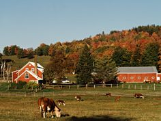 Vermont Farm in the Fall, USA
