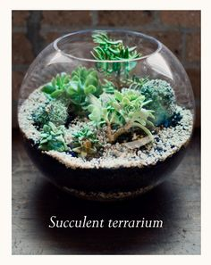It's easy to make your own diy air plant terrarium! Check out these 3 easy steps to create your own terrarium using just vase filler and air plants. Succulent Gardening, Cacti And Succulents, Planting Succulents, Cactus Plants, Garden Plants, Container Gardening, Planting Flowers, Sempervivum, Echeveria