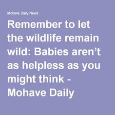 Remember to let the wildlife remain wild: Babies aren't as helpless as you might think - Mohave Daily News
