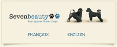 Seven beauty Portuguese Water Dog, Dogs, Beauty, Doggies, Beauty Illustration, Pet Dogs, Dog