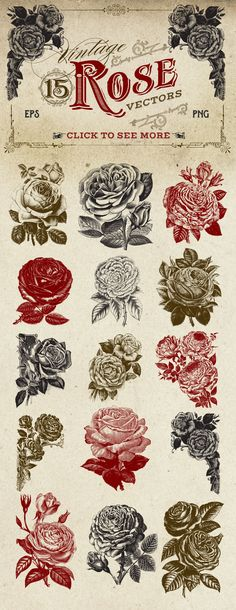 Vintage Rose Vector Graphics by Eclectic Anthology on Creative Market