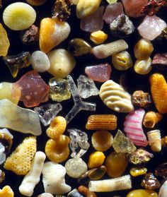 """Sand grains from Maui, Hawaii. These were the first grains of sand that I examined through the microscope. I was amazed by the array of spectacular bits and pieces. The """"Y"""" shaped glassy structure at the top is a sponge spicule, which functions as the internal skeleton of most sponges. Just to the left and down are two perfectly formed microscopic shells. Just to the right and down from the sponge spicule is a bit of brown sea urchin spine, with its intricate structural design"""
