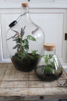 Bottle terrarium. www.hetgroenlab.nl