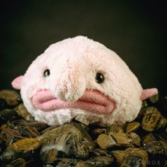 Pourquoi c'est top ? Parce que l'animal marin le plus moche de la création méritait bien une peluche à son effigie.   Parce que même si c'est moche, ça reste doux.