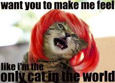 So true she is a feline