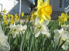 Fish Creek flowers, Spring in Door County! Door County Wisconsin, Fish Creek, Best Vacations, Lodges, Cool Pictures, Doors, Nice, Spring, Flowers