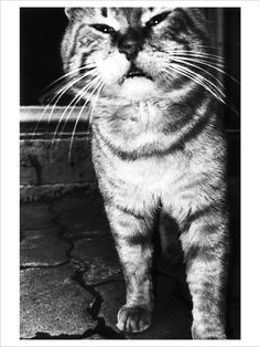 Photographed by Anders Petersen, one of the most important European photographers living today Hate Cats, Bnf, Ansel Adams, Film Stills, Black And White Photography, Portrait Photography, Prints, Wide Angle, Tigers