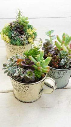 succulents(cup)