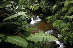 "quetzaltenango guatemala | Parque agroecologico ""El Palmar"" Quetzaltenango-Guatemala"